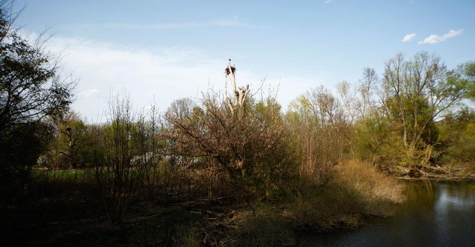 Erleben Sie Natur rund um Marchegg